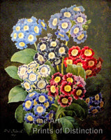 Bouquet of Auriculas by Pierre Joseph Redoute