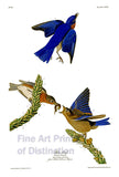 Blue Birds by John James Audubon