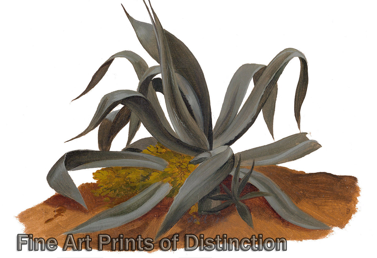 Study of an Agave Plant by Johan Christian Dahl Art Print