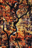 Twisted Branches with Yellow Leaves Art Print