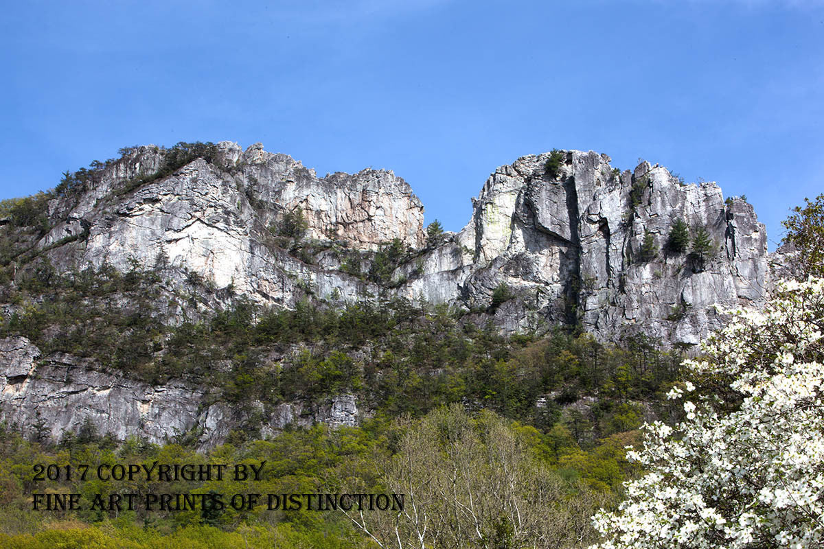 Seneca Rocks Spring Close Up View with Dogwood Art Print