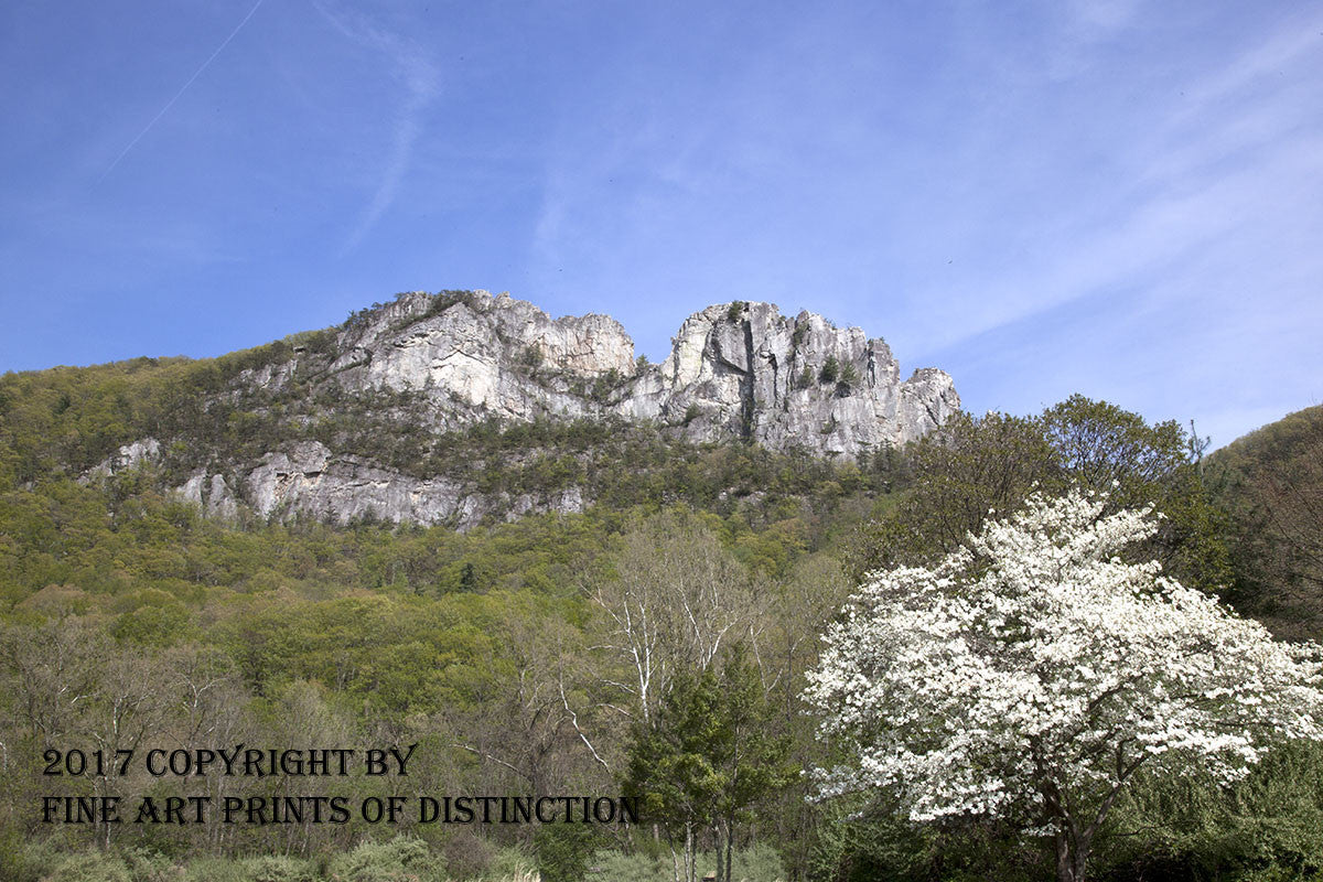 Seneca Rocks with White Dogwood Art Print