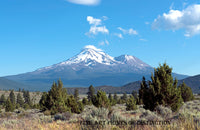 Mount Shasta with a Field of Evergreens Art Print