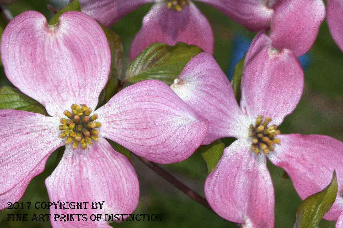 Dogwood With Pink Bloom Painting Art Print