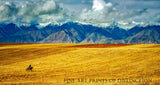 Landscape with Golden Fields and Lone Horseback Rider Art Print