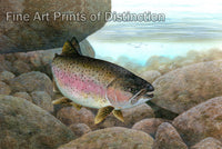 Rainbow Trout by Tim Knepp