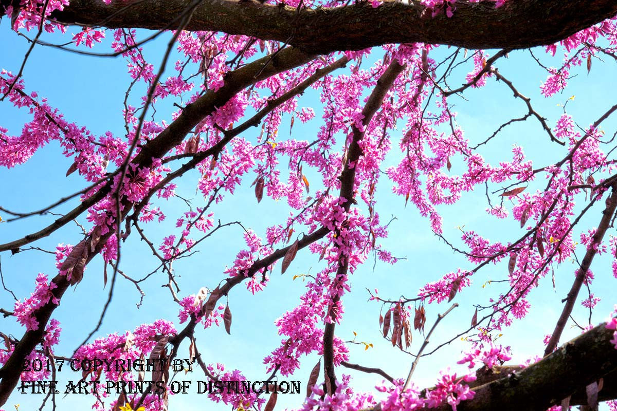 Red Buds Framed in the Sky Art Print