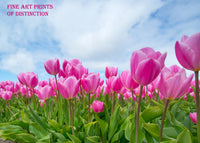 Tulips with Pink Blooms Swaying in the Breeze Premium Botanical Print