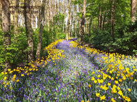 Wooded Landscape with Yellow Tulips and Grape Hyacinths premium print
