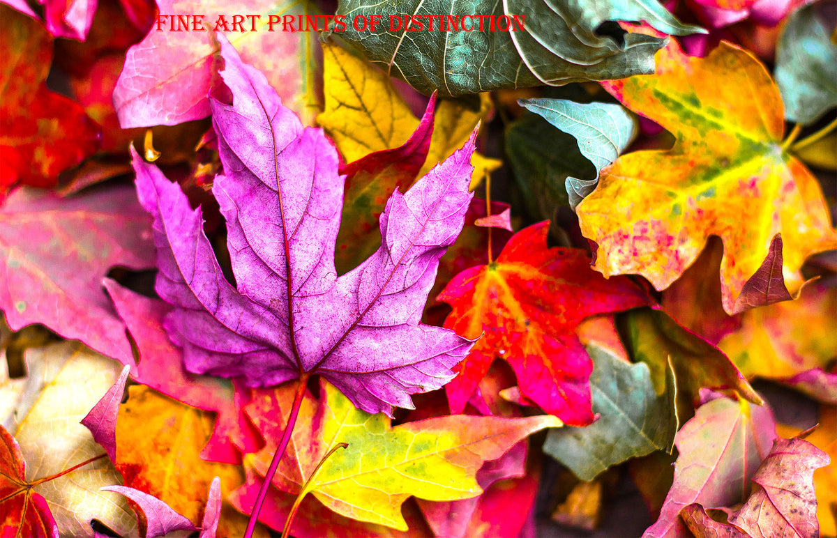 Myriad of Colorful Fall Leaves Art Print