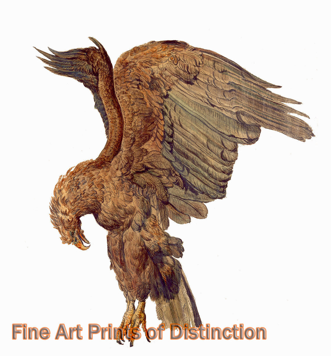 Study of a Plunging Eagle by James Ward Art Print