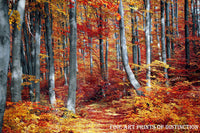 A Walking Path Dividing an Orange and Red Fall Landscape Premium Print