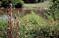 Teasel & Orange Jewel Weed along South Branch of Potomac River Art Print