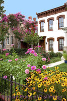 Flower Garden in Front of Row Houses