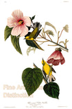 Blue Winged Yellow Warbler Bird by John James Audubon