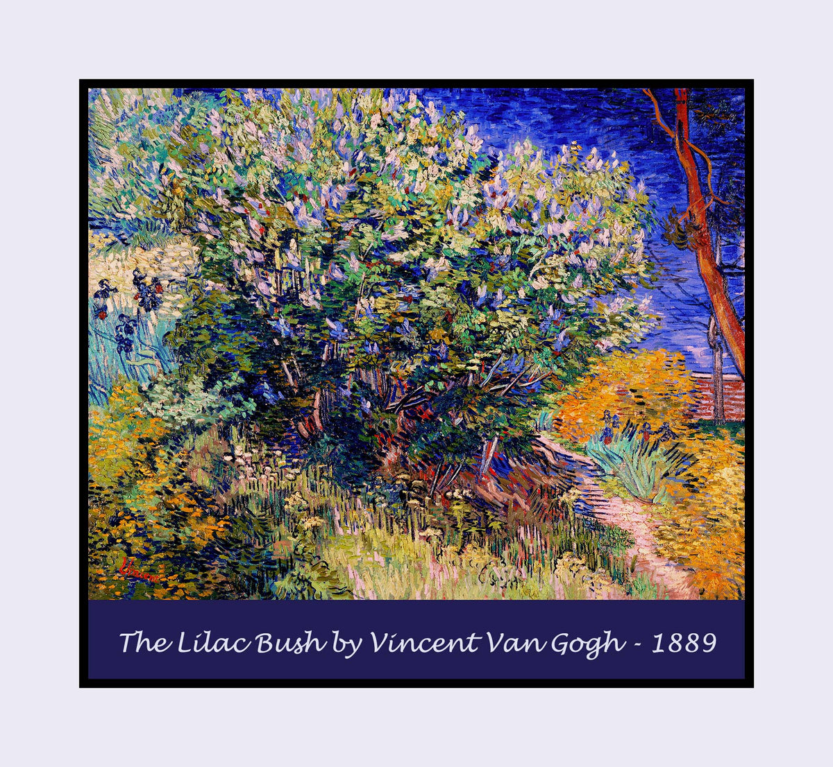 The Lilac Bush painted by Vincent Van Gogh premium poster