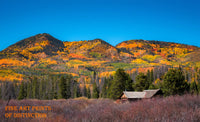 A Brilliantly Painted Mountain in Fall Colors Fine Art Print
