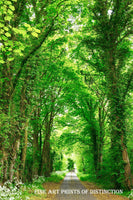 Country Road in the Summer Lined with Green Trees Premium Print