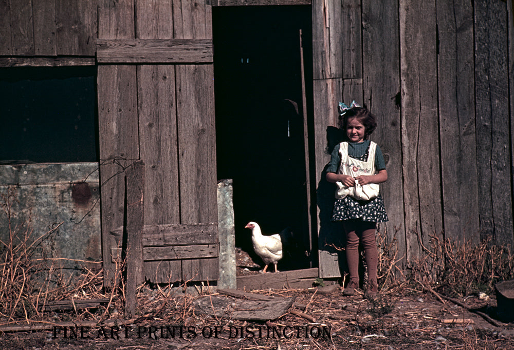 Little Girl Gathering Eggs in the Hen House from 1940