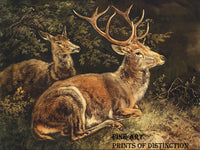 Rotwild or Red Deer painted by the German Artist, August Schleich