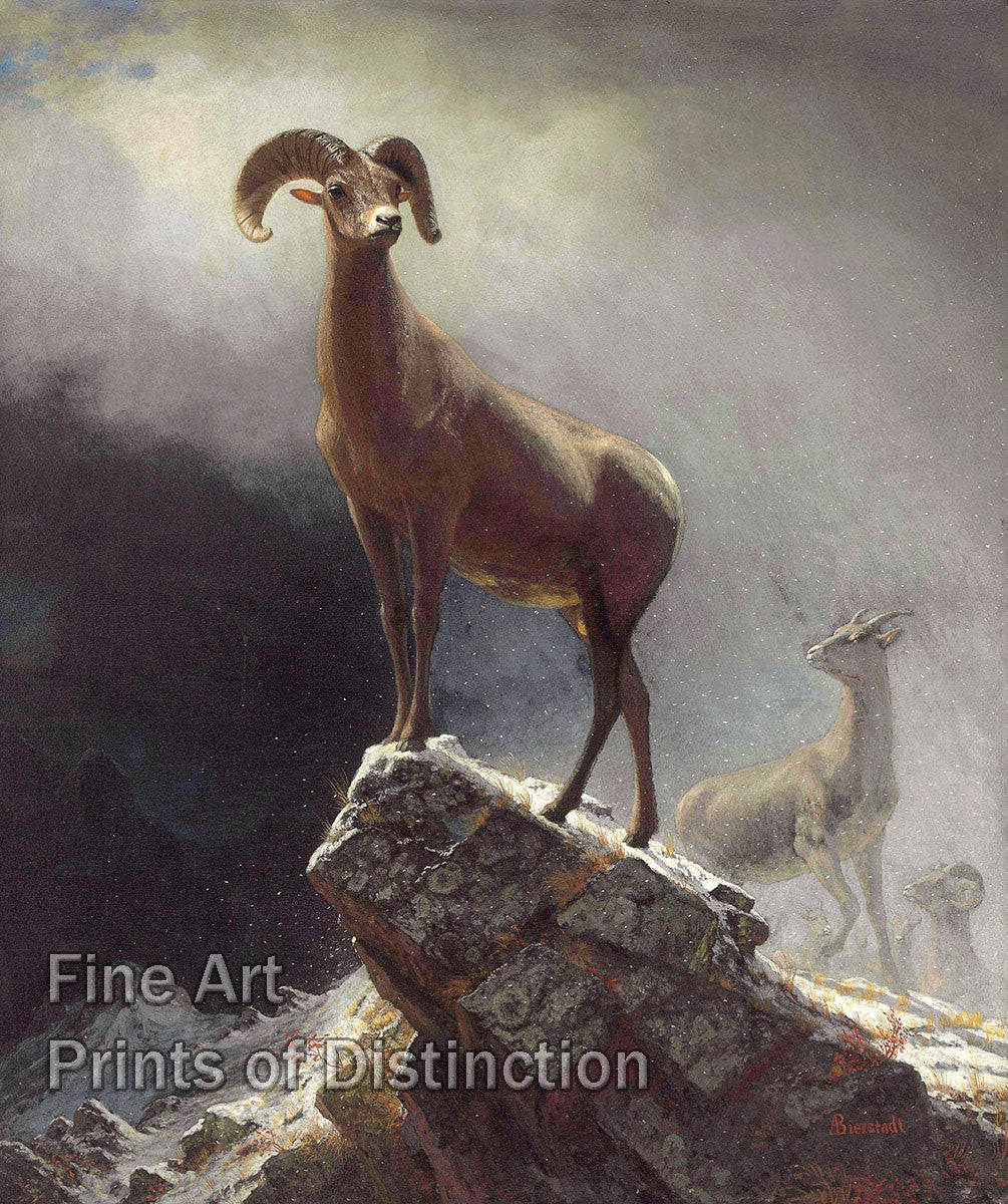 Bierstadt, Albert - Bighorn Sheep Fine Art Print