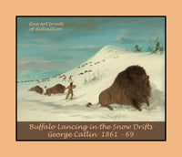 Buffalo Lancing in the Snow Drifts by George Catlin premium western poster