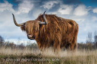 Hairy Bull from Pre Historic Times Country Decor Print