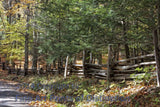 Rail Fence and Hemlock Trees Along a Country Road Art Print