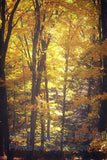 Vintage Ethereal Yellow Fall Trees Art Print