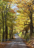 Country Road Winding Through Yellow Fall Trees Art Print