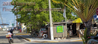 Local Life in Key West Florida Art Print