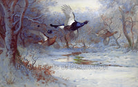 Blackcock and Guineas in Winter Flight by Archibald Thorburn