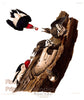 Red Headed Woodpecker Fine Art Bird Print by John James Audubon