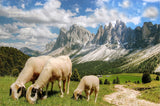 A premium quality print of Flock of Sheep Grazing in Front of Peaked Mountains