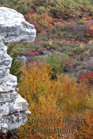 Fall Leaves and Ancient Carving on Dolly Sods Art Print