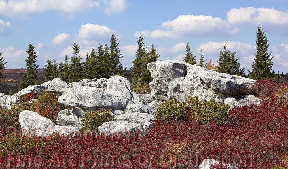Turtle Rock in the Fall at Dolly Sods Art Print