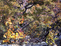 Fall Scene Straight Down the Rocks Art Print