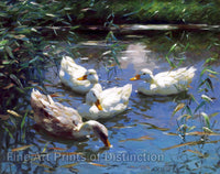Koester, Alexander - Four Ducks on a Pond Fine Art Nature Print