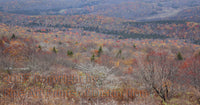 Late Fall Scene from the Summit of Spruce Knob
