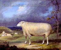 Ward James - A Border Leicester Ewe Animal Print