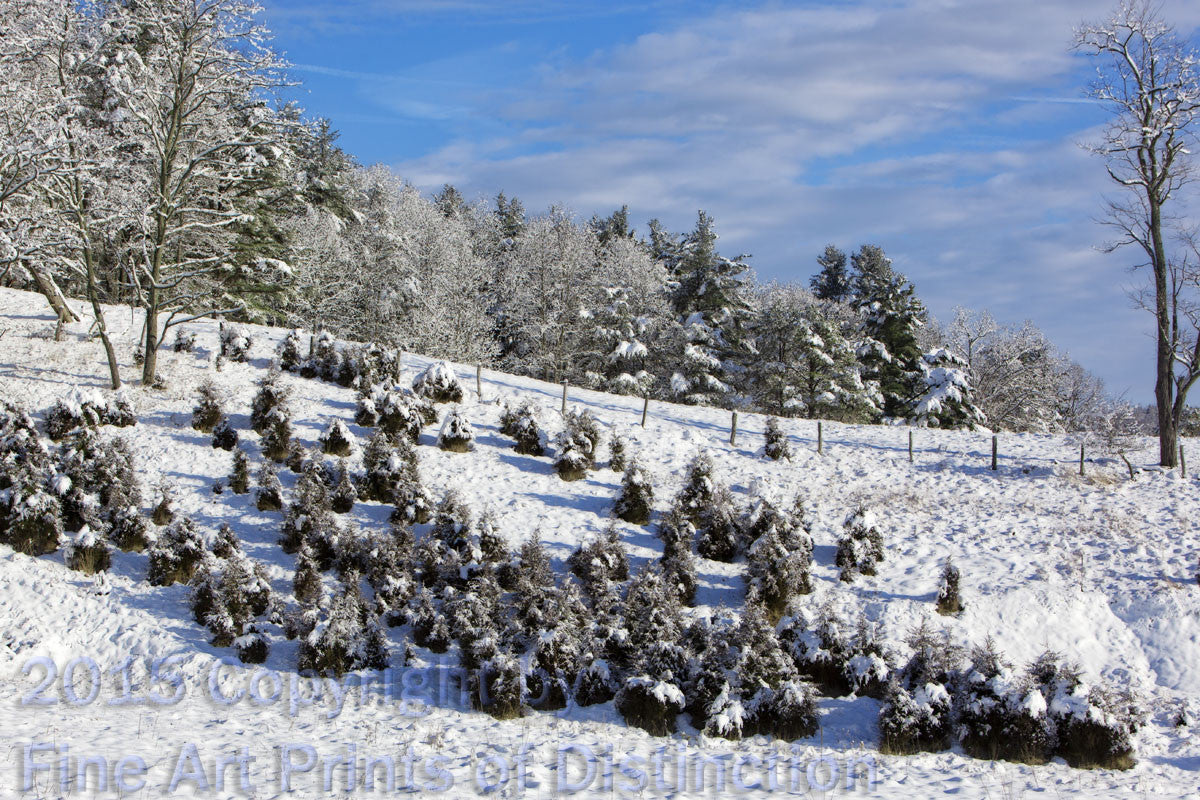 Cedar Fence Row in a Winter Landscape Art Print