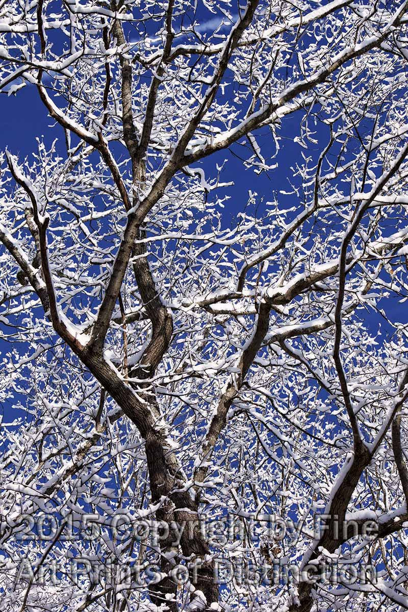 Icy Branches in a Deep Blue Sky Art Print