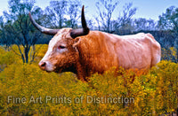 Texas longhorn cow in a field with yellow wildflowers