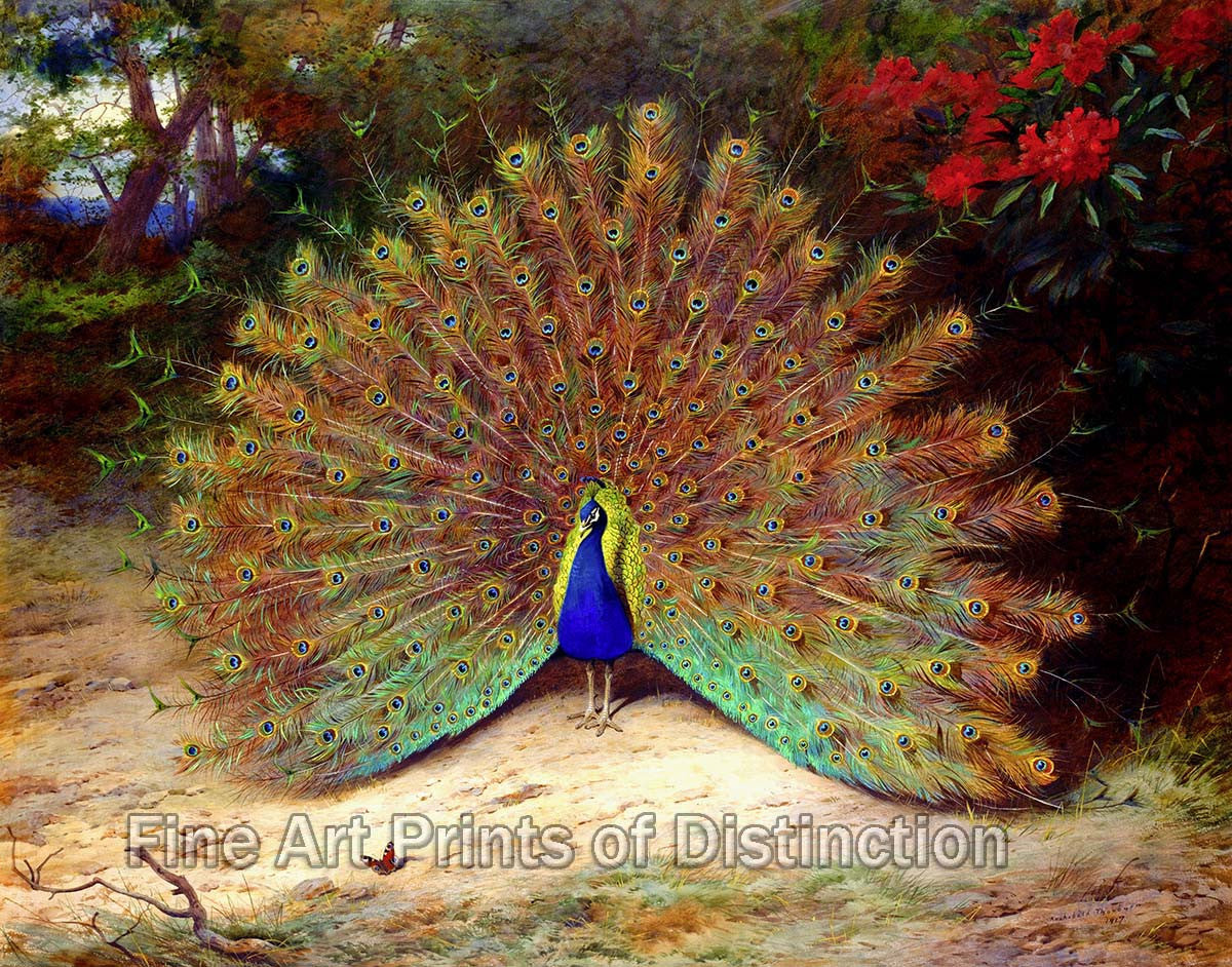 Peacock and Butterfly by Archibald Thorburn