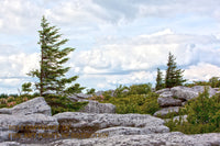 Barren Landscape at Dolly Sods Art Print
