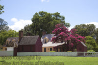 Beautiful Homestead with Pink Crepe Myrtle in Williamsburg