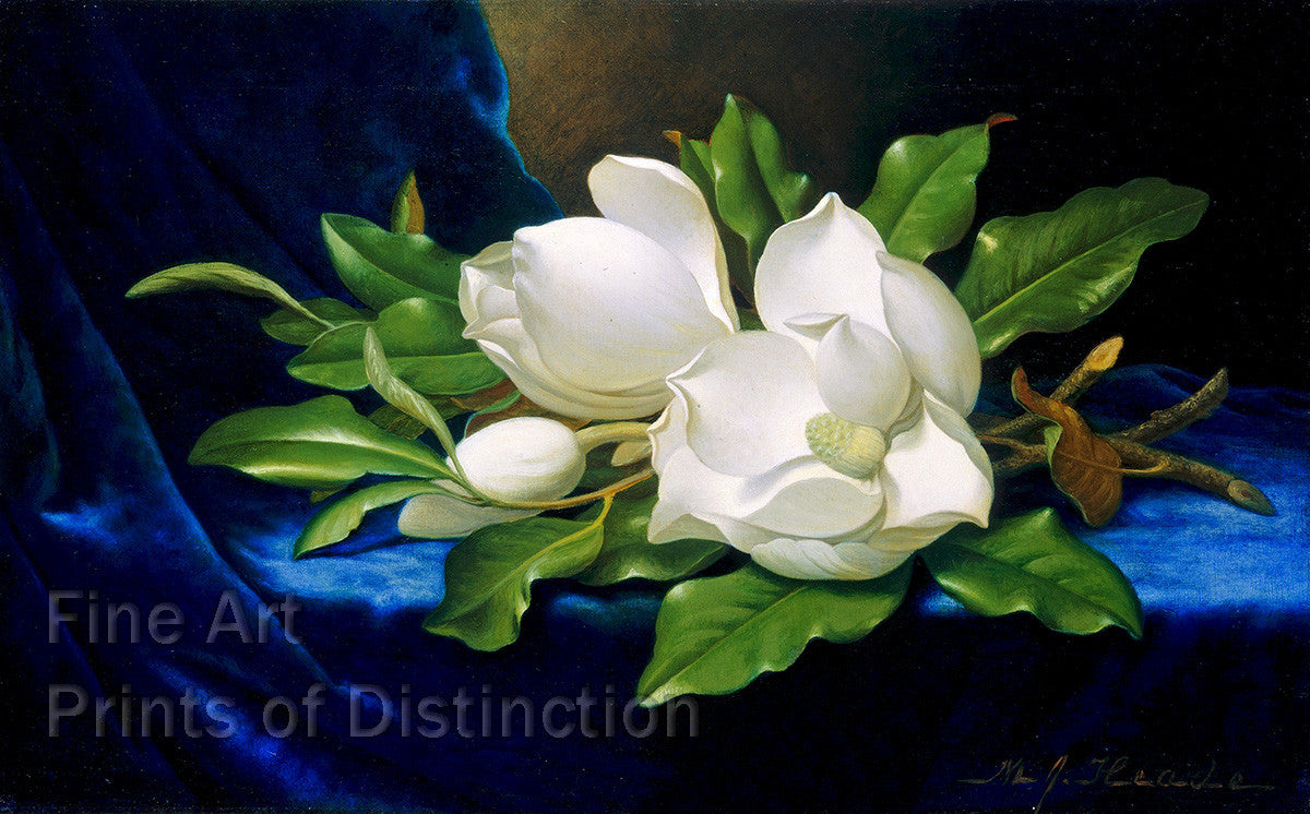 Giant Magnolias on Blue Velvet Cloth painted by Martin Johnson Heade