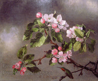 Heade, Martin Johnson - Hummingbird and Apple Blossoms