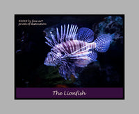 Lionfish with Spread Fins premium poster
