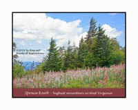 A premium poster of Grove of Wind Swept Spruce and White Wild Flowers